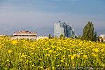 Цветущий Волгоград
