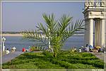 набережная пальма фото